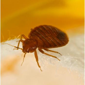 Bed bug control croydon